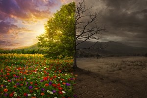 Beautiful colorful landscape transforms from desert with no color.