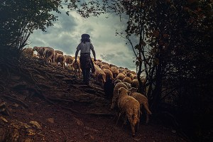 A shepherd with his sheep