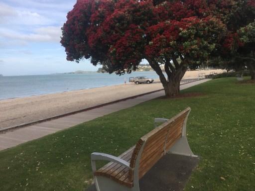 Kiwi Christmas Tree Photo by Ken Burridge