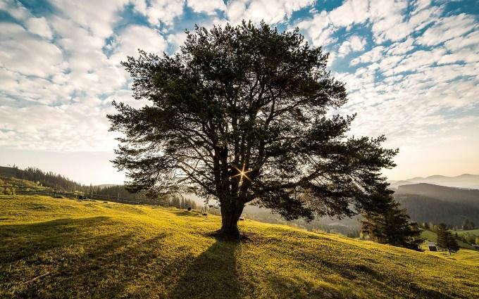 tree-338211_1280