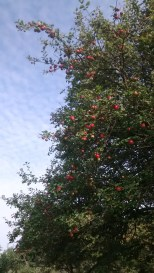 Sep 2014 Falkland Palace orchard