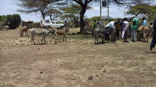 Donkey welfare checkups at Kambakia - Nkando village