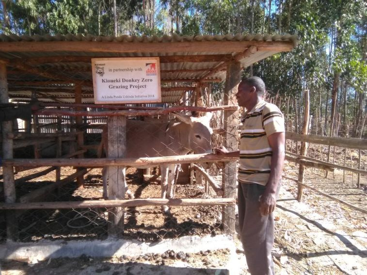 Secured Donkey Shelter