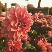 Flowers for Tet