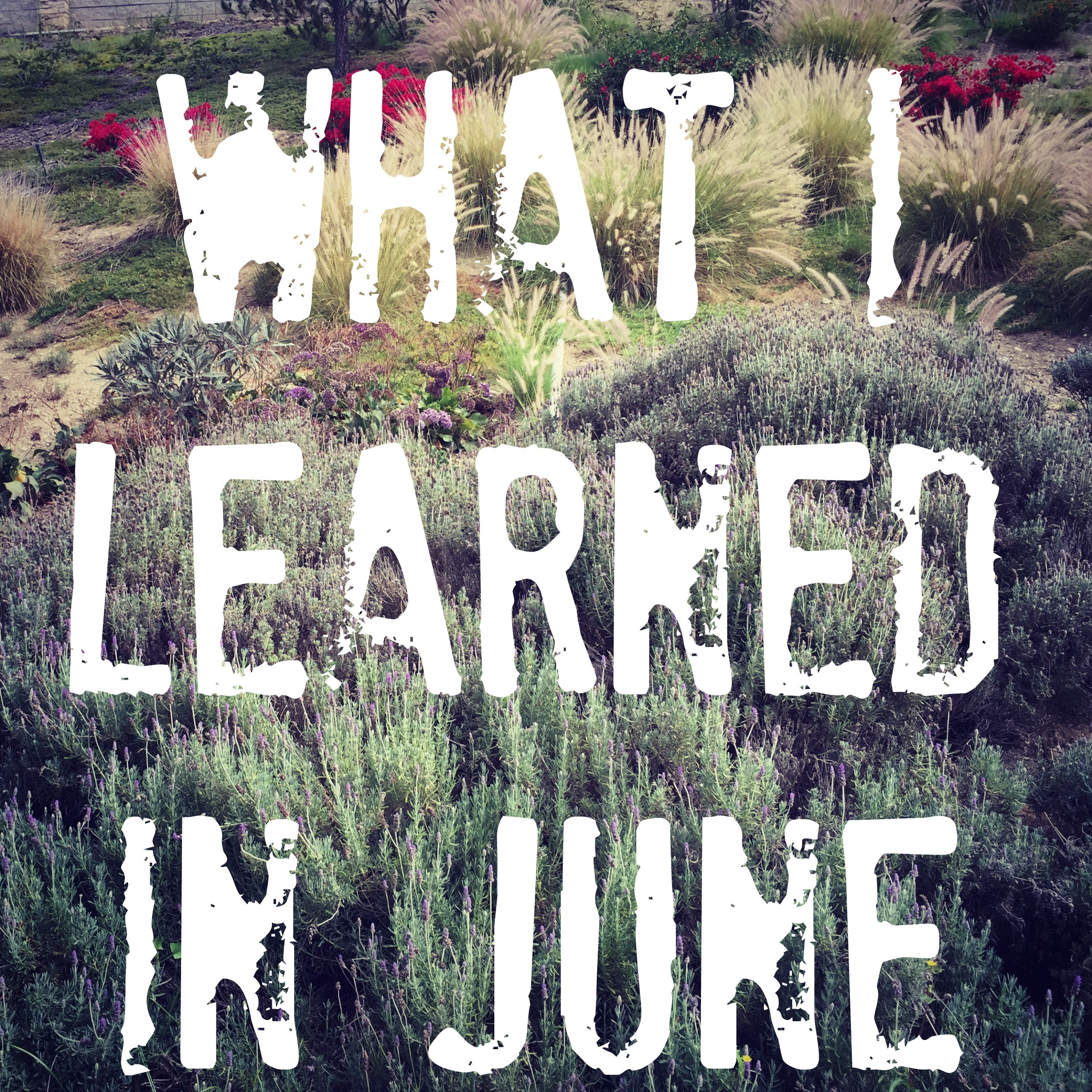 What I Learned in June {2015}