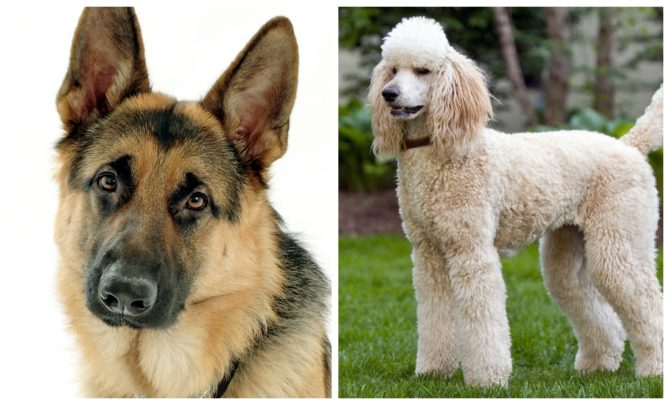 Spouses as Dogs