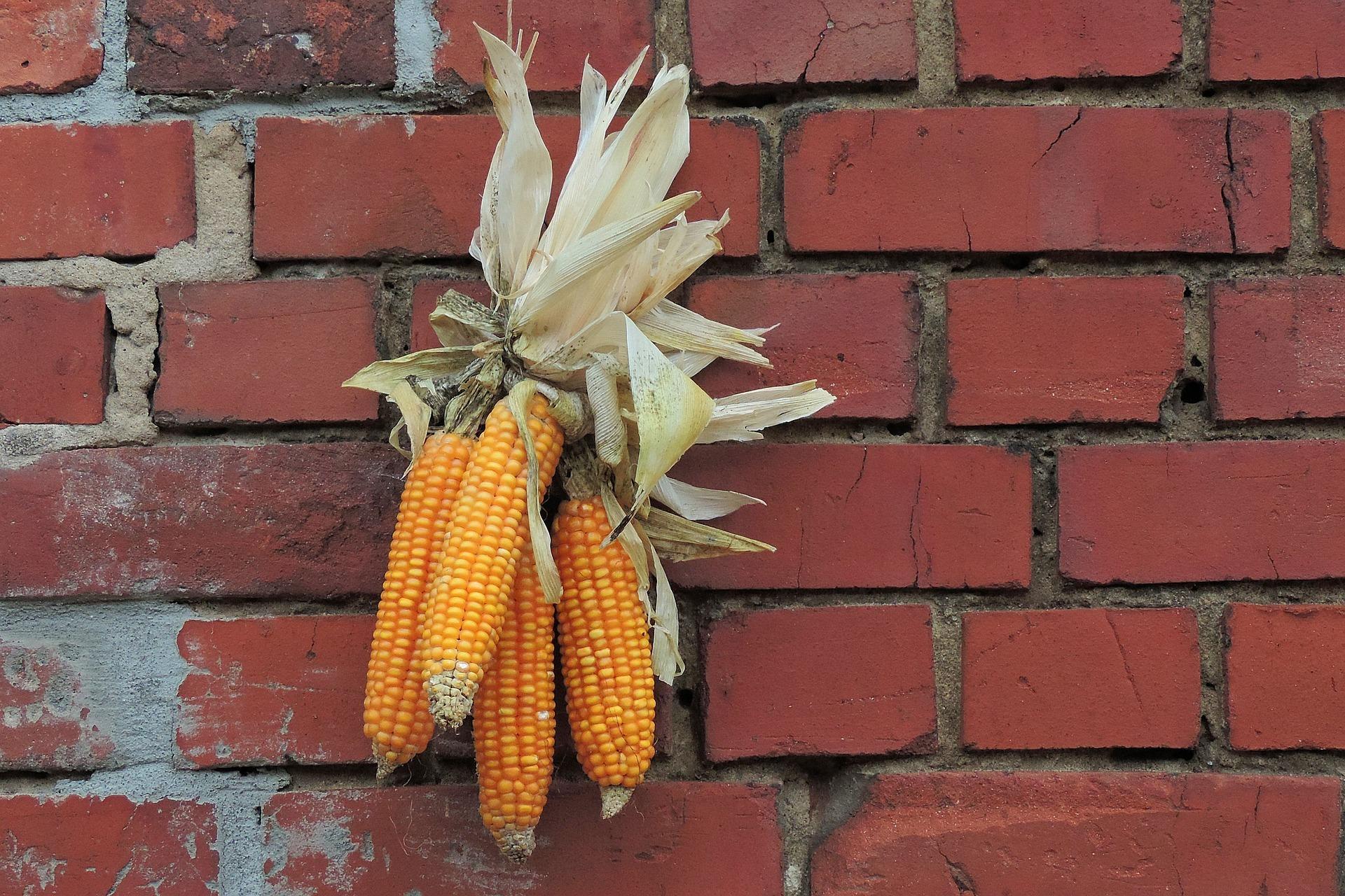 Cinco de Wednesday: New Thanksgiving Traditions