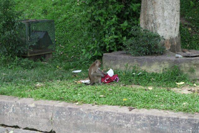 Batu Caves, Rude Monkey Gives Me the Middle Finger in Kuala Lumpur's Batu Caves