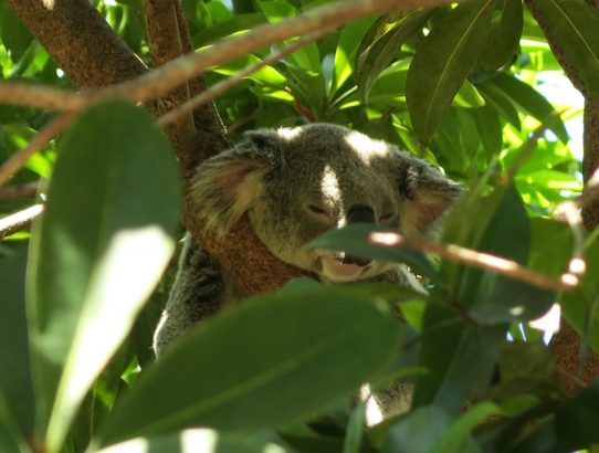 35+ Pictures of the Amazing Australia Zoo (Steve Irwin's Zoo)