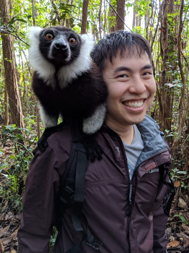 vakona forest reserve, Playing with Lemurs At The Vakona Forest Reserve in Madagascar