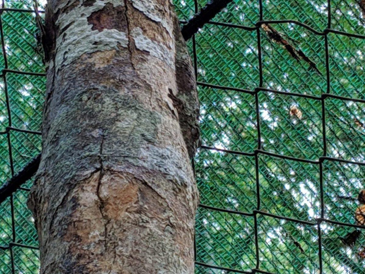 vakona forest reserve
