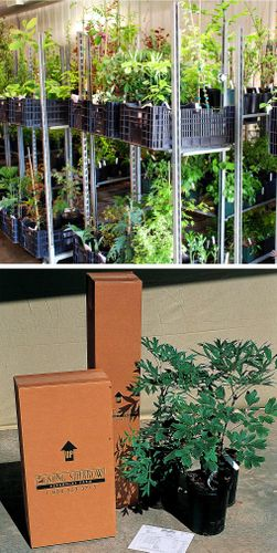 Mail Order Plants With Renee Jaeger