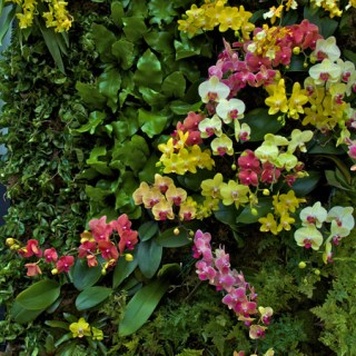 Vertical Orchid Gardens at NYBG with Marc Hachadourian