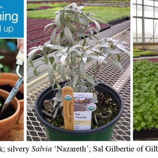Herb Gardening with Sal Gilbertie