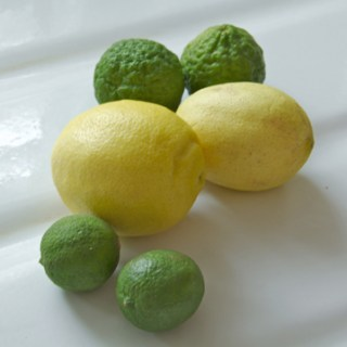 Growing Limes Indoors with Ken