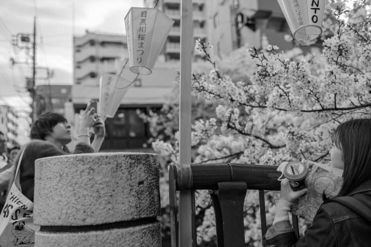 sakura-b17_04_12.jpg