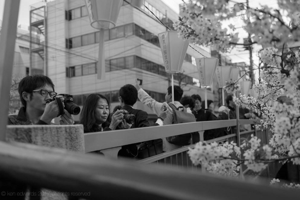 sakura-b17_04_12-2.jpg