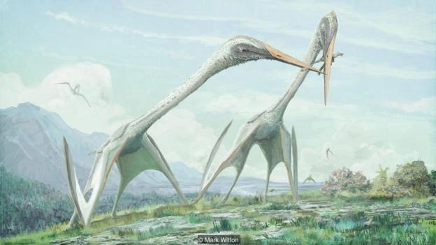 Liệu trên đời này có loài nào tiến hóa được thành… rồng? - ảnh 6