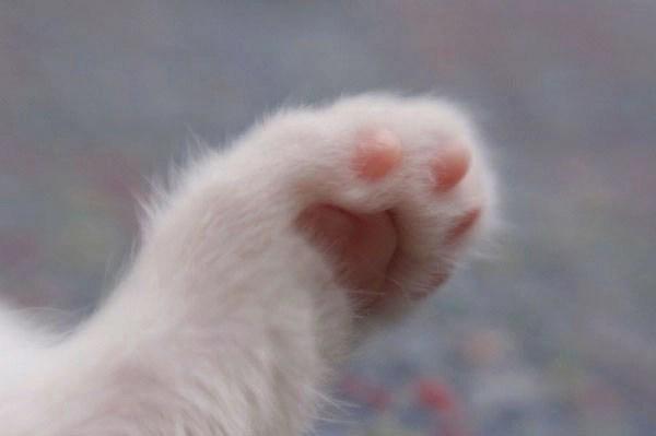 Kết quả hình ảnh cho chân mèo