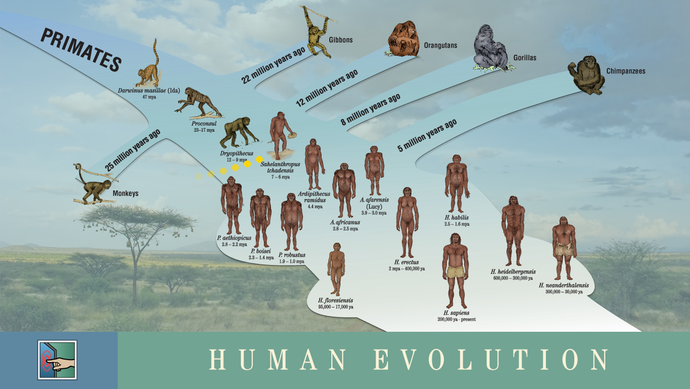 diagram of evolution timeline disaster management cycle need to and human on pinterest