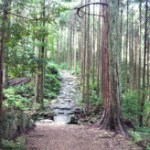Vol.181 熊野古道で登山(馬越峠〜天狗倉山~オチョボ岩)