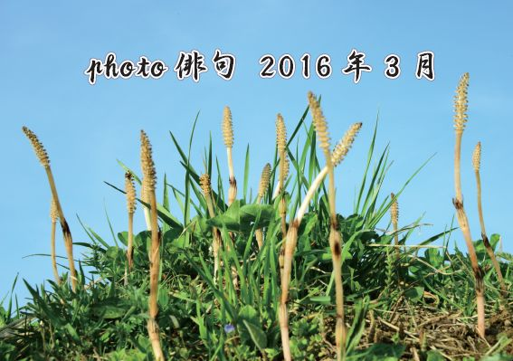photo俳句(3月投稿分)