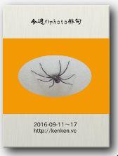 今週のphoto俳句(16/09-11~17)