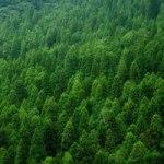 森 木材チップ乾燥機 2017.9.28