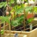 初心者もお家で簡単に!プランター栽培に向いている野菜