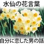 【画像】水仙(スイセン)の黄・白・紫の花言葉は?ナルシストで怖いギリシャ神話が由来?