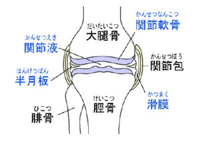 膝の仕組み