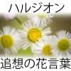 ハルジオン花言葉の意味!歌詞や「あの花」の追想の愛とは?