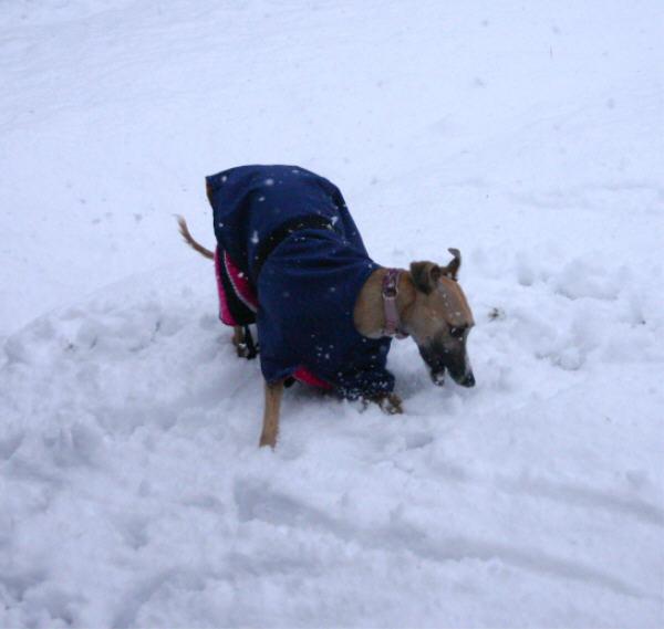 web-paisley-in-snow.jpg