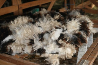 web-shearing-4