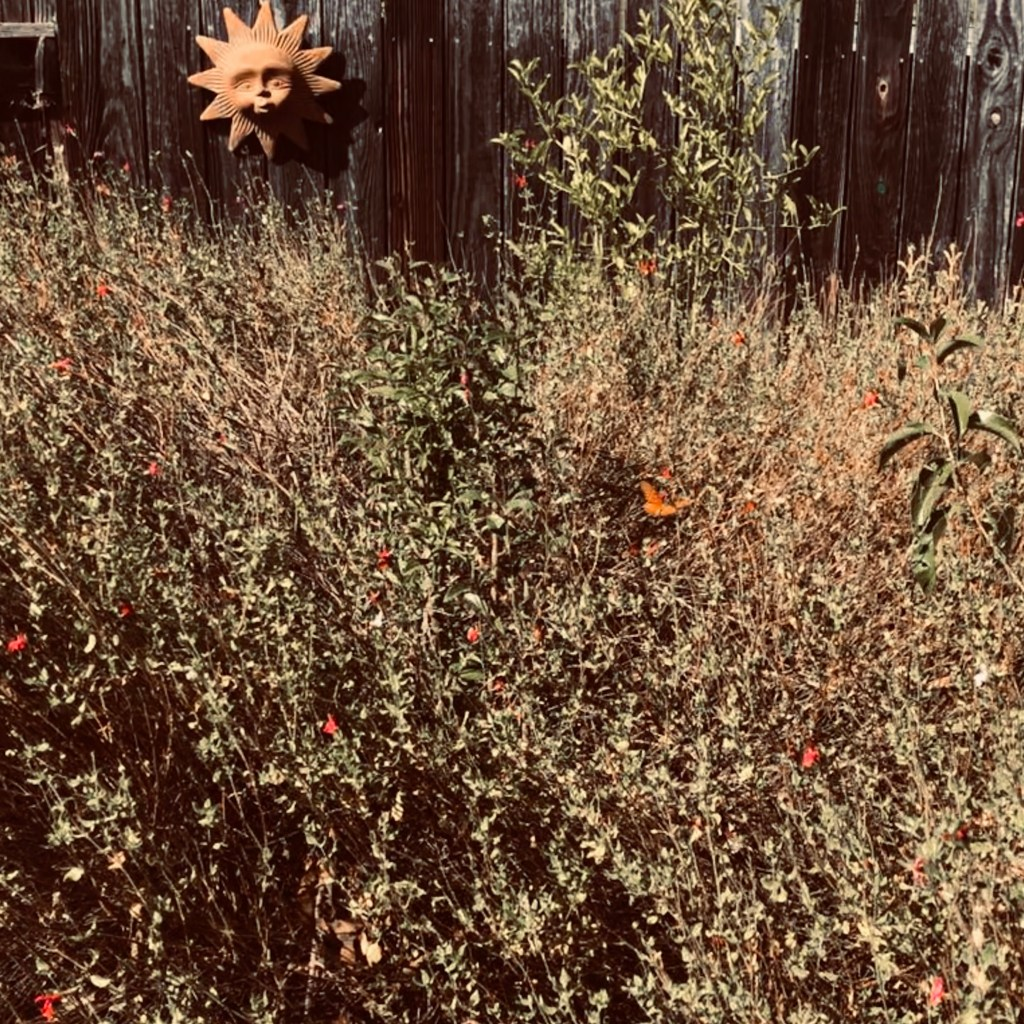 Native Plants and Butterfly
