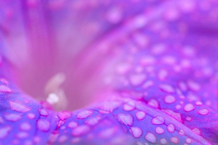 It's Purple