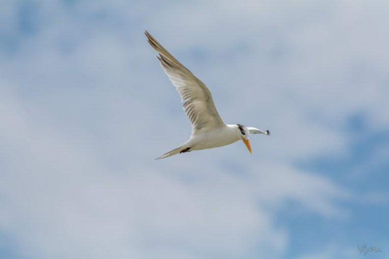Tern's Turn IV