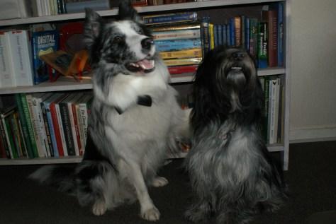 Hotdog & Viggo - bedste venner