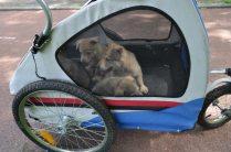 puppykar 3