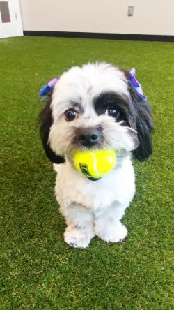 pet-sitting_puppy_dog_training_kennesaw_marietta_georgia