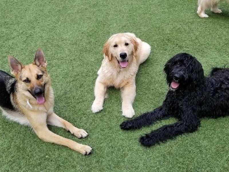 pet-sitting_dog_training_kennesaw_marietta_georgia