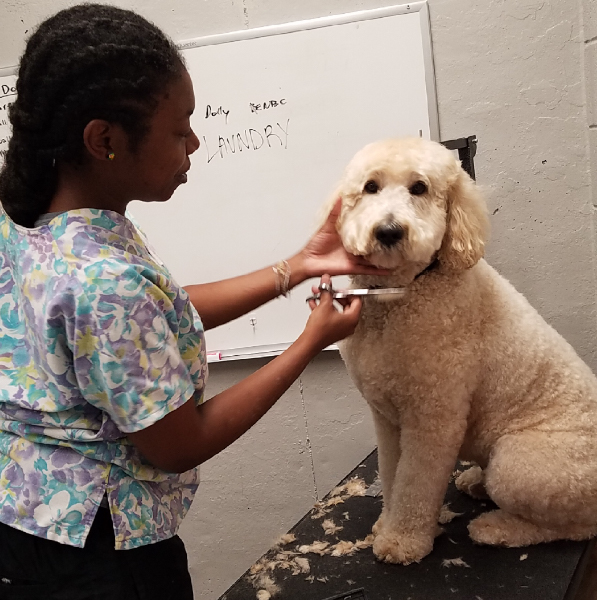 dog_cat_grooming_kennesaw_marietta