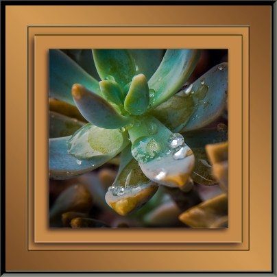 gray-succulant-1-of-1-2-blog