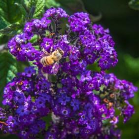 Balboa Park Flowers-1974 blog