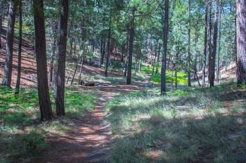 Box Camp Trail-1887 blog