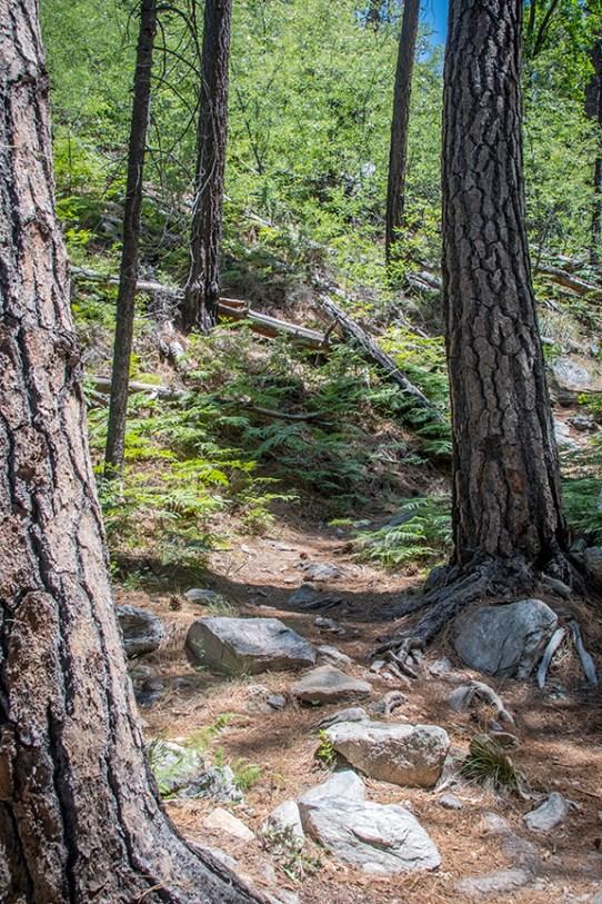 Box Camp Trail-1903 blog