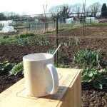 Tea mug resting on box next to allotment