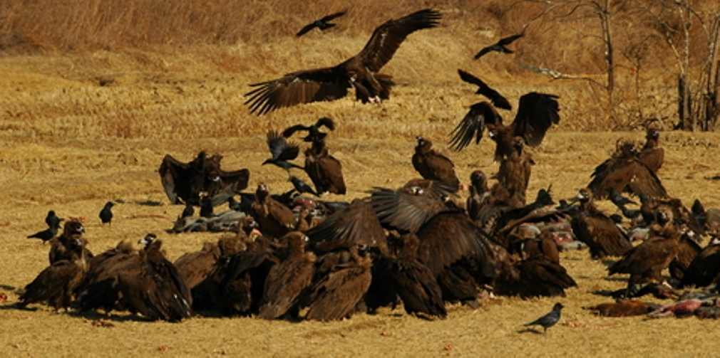 Image result for wherever the vultures gather