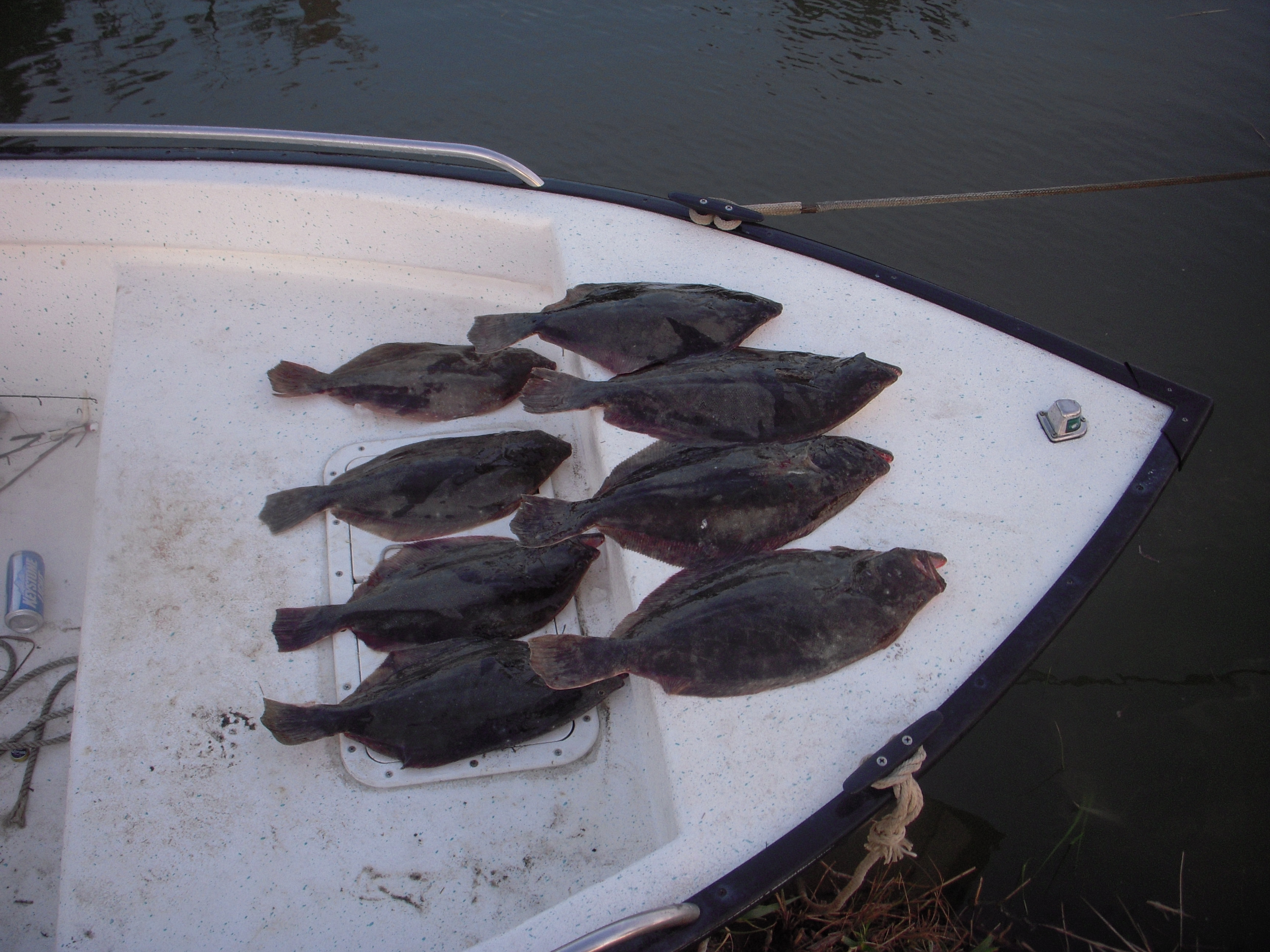 flounder 018
