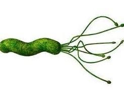 Helicobacter pylori-viw